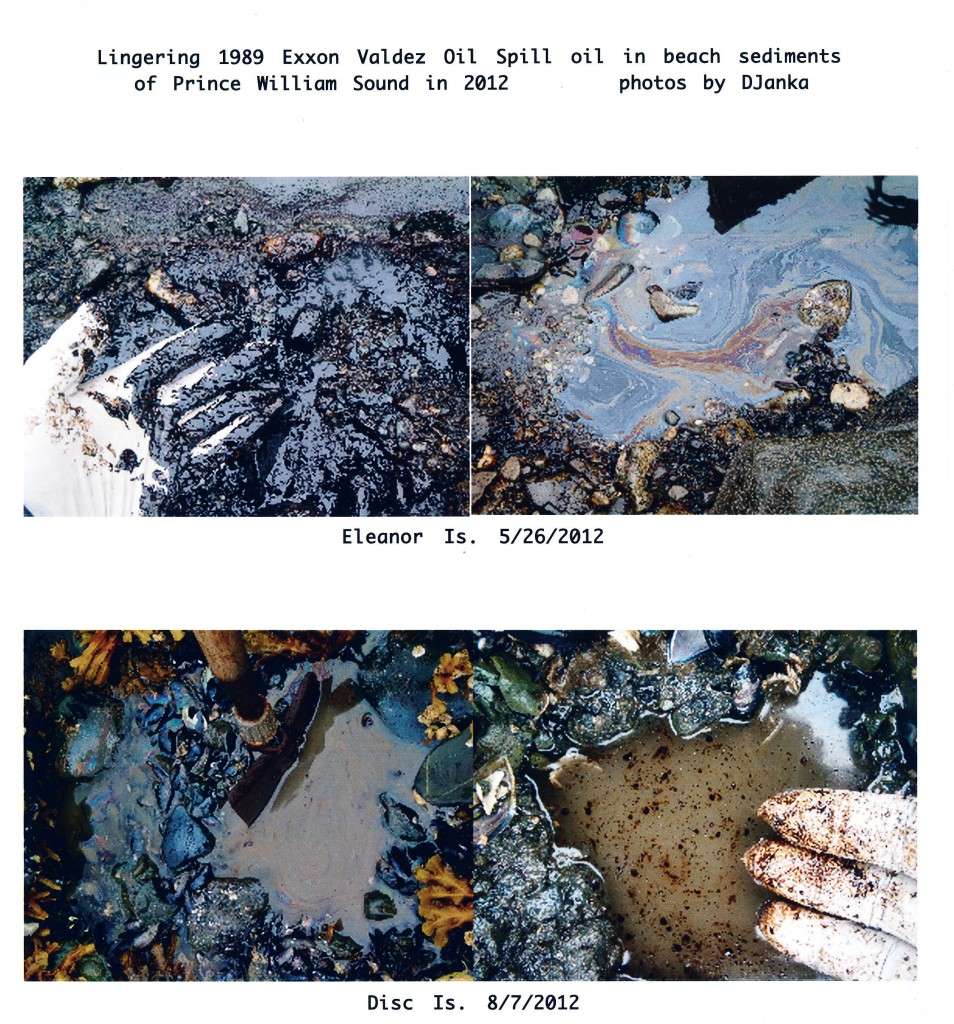 Lingering Oil from the 1989 Exxon Valdez Oil Spill in 2012 - Photo by Dave Janka