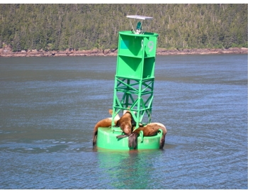 Sea Lions on buoy in Prince William Sound - Alan Sorum