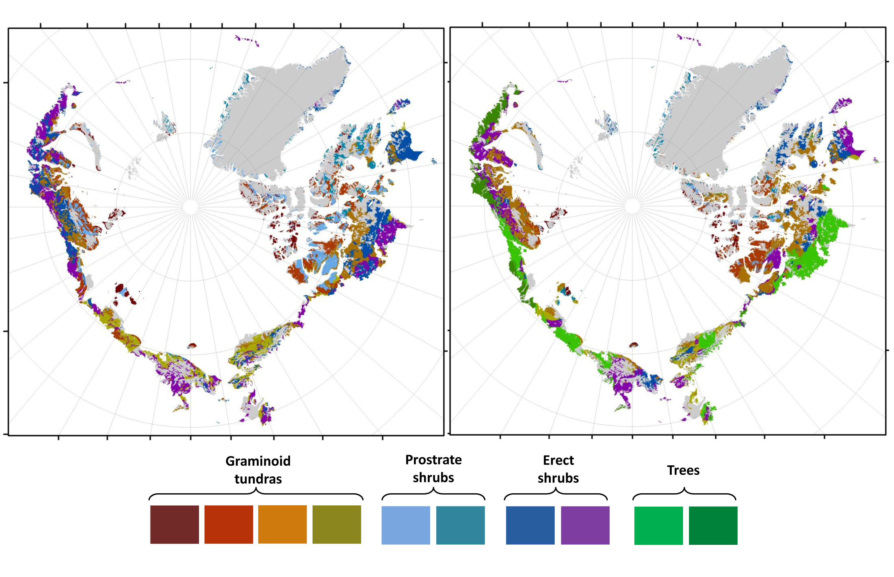 Greener Arctic Forecast: Observed distribution (left) and predicted distribution of vegetation under a climate warming scenario for the 2050s (right). Credit: American Museum of Natural History