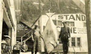 Juneau Halibut at the Dock